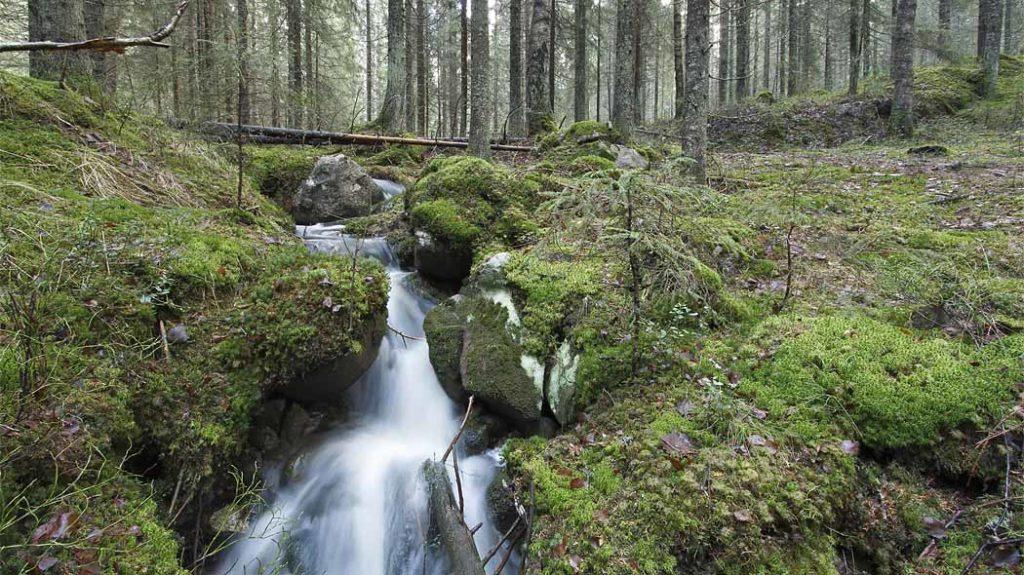 Nuuksion_kansallispuistoa_JussiHelimaki_1050x590